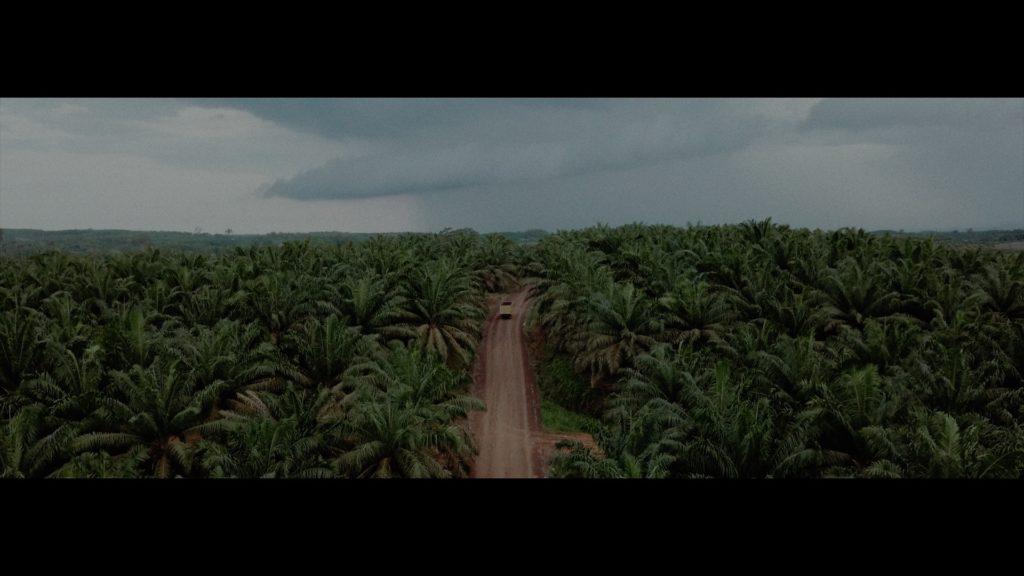 sawit, kelapa sawit, perkebunan kelapa sawit